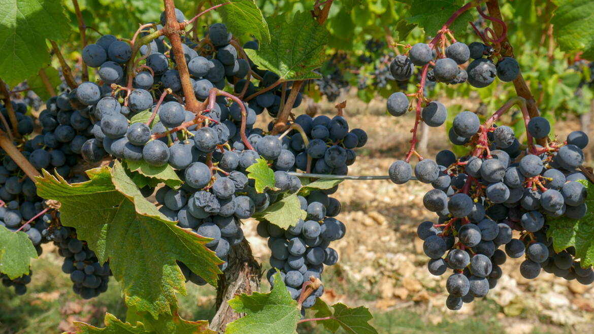 Wine Tasting and Vineyards – Drinking your way through the Dordogne Valley