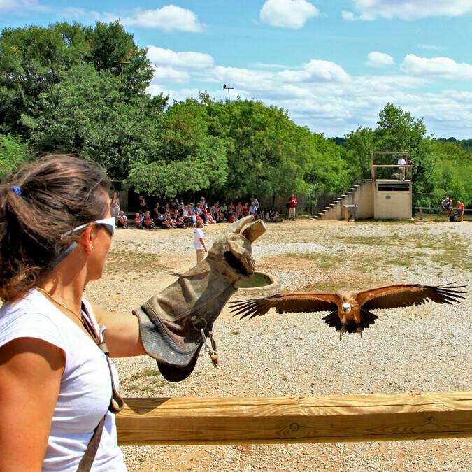 Rocher des Aigles Bird Show