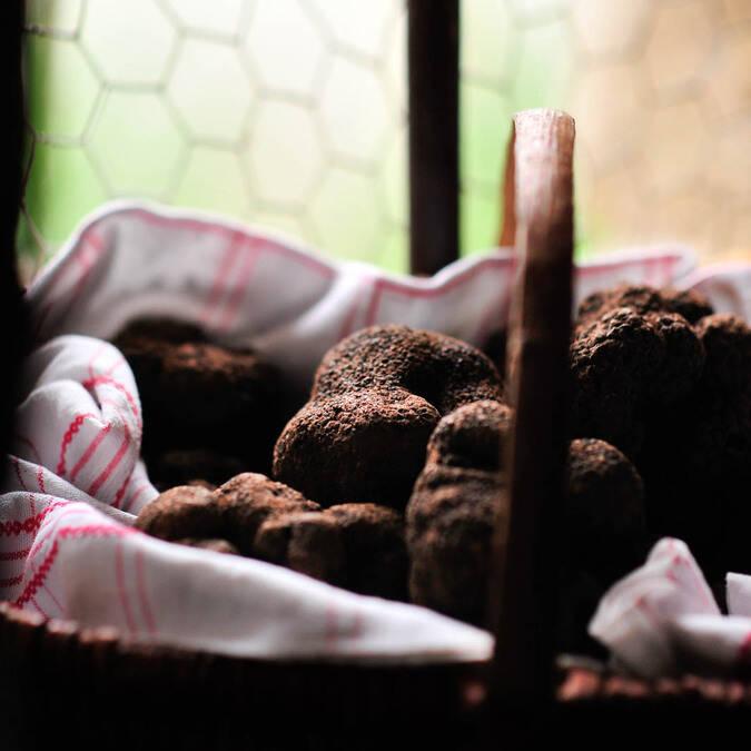 Winter truffles in a basket